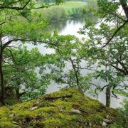 Wald mit Blick auf die Eder